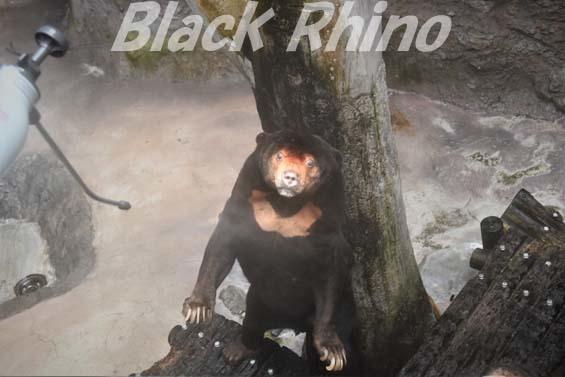 マレーグマ ワンピイ04 高知県立のいち動物公園