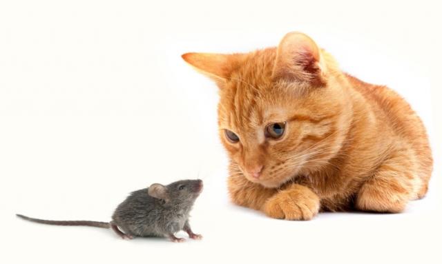 mouse-cat.jpeg