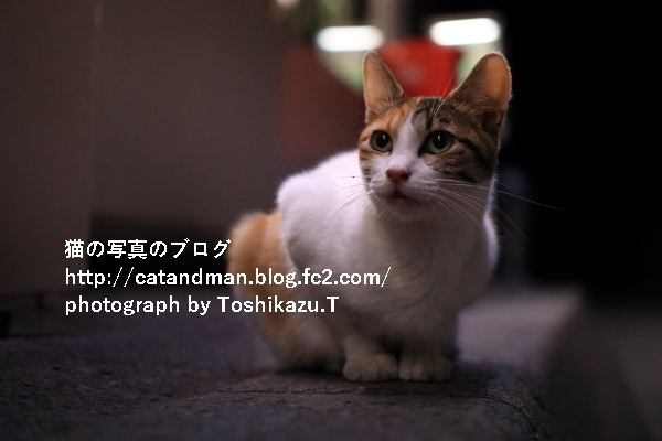 IMG_0262s.jpg