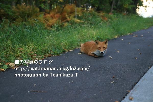 IMG_0350s.jpg