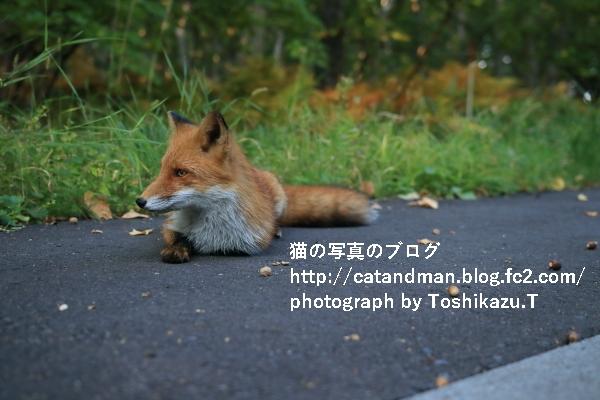 IMG_03512s.jpg