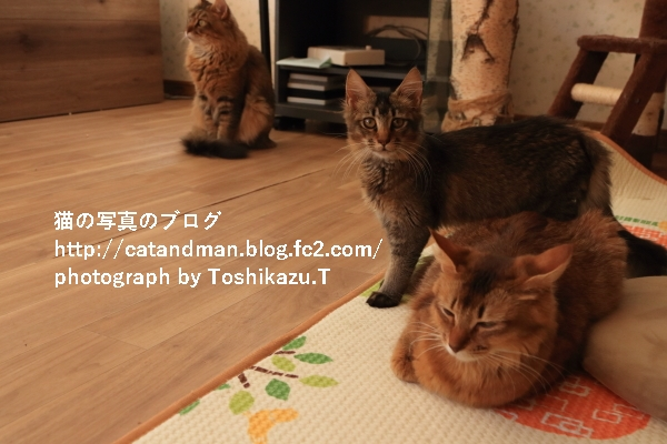IMG_1523s.jpg