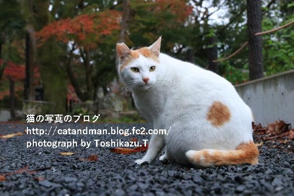 IMG_2994s.jpg