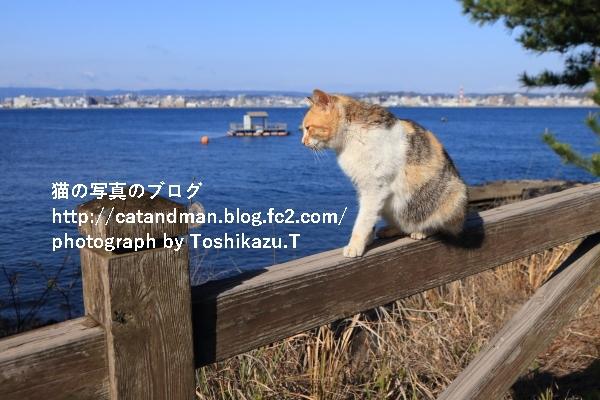 IMG_3219s.jpg