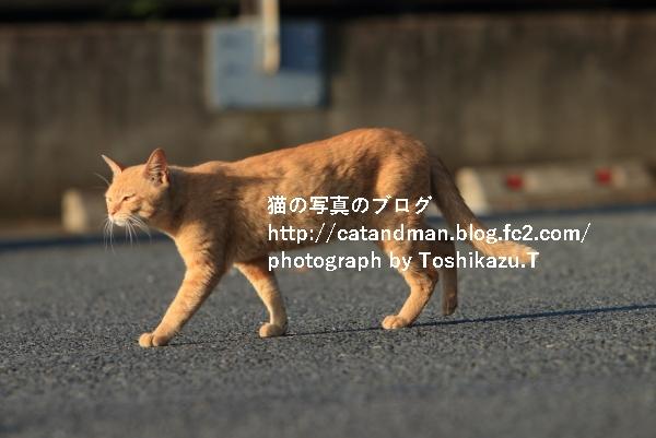 IMG_4475s.jpg
