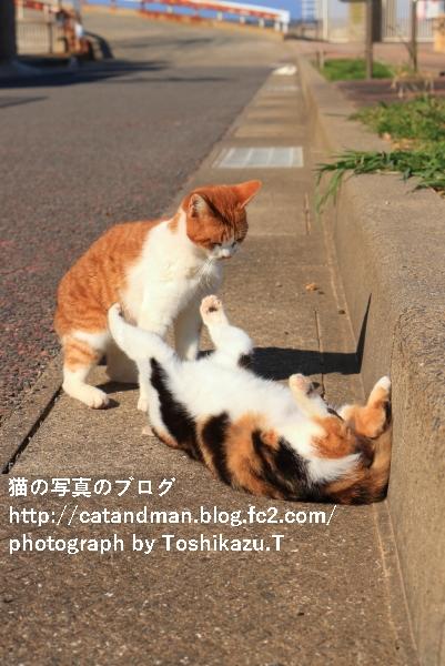 IMG_6942s.jpg