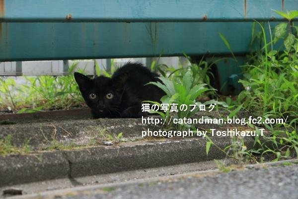 IMG_7695s.jpg