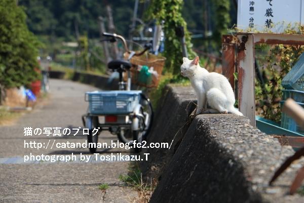 IMG_9984s.jpg