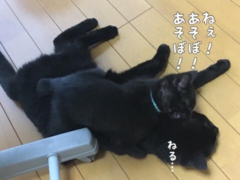 fc2blog_201906301935067bc.jpg