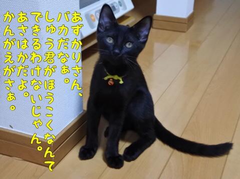 fc2blog_20190821212314a5b.jpg
