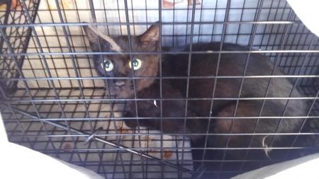 ①黒母猫1