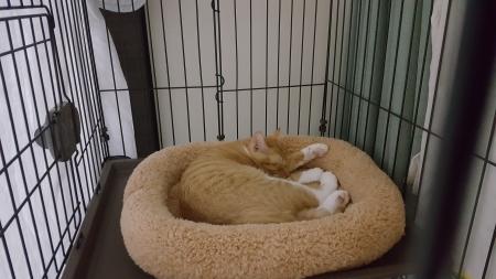 ぐっすり眠る桃李君