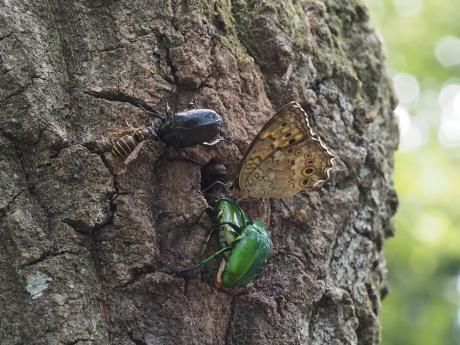 ホンシュウキオビホオナガスズメバチその他