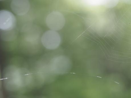 トゲグモ網