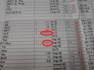 きなこちゃん、検査結果 004