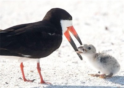 親鳥がヒナに与えていたのは5d15799b250000a81ae9bc3f