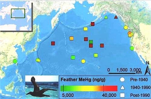 北太平洋の魚介類のメチル水銀濃度 過去100年間に深刻に高くなっている fish34