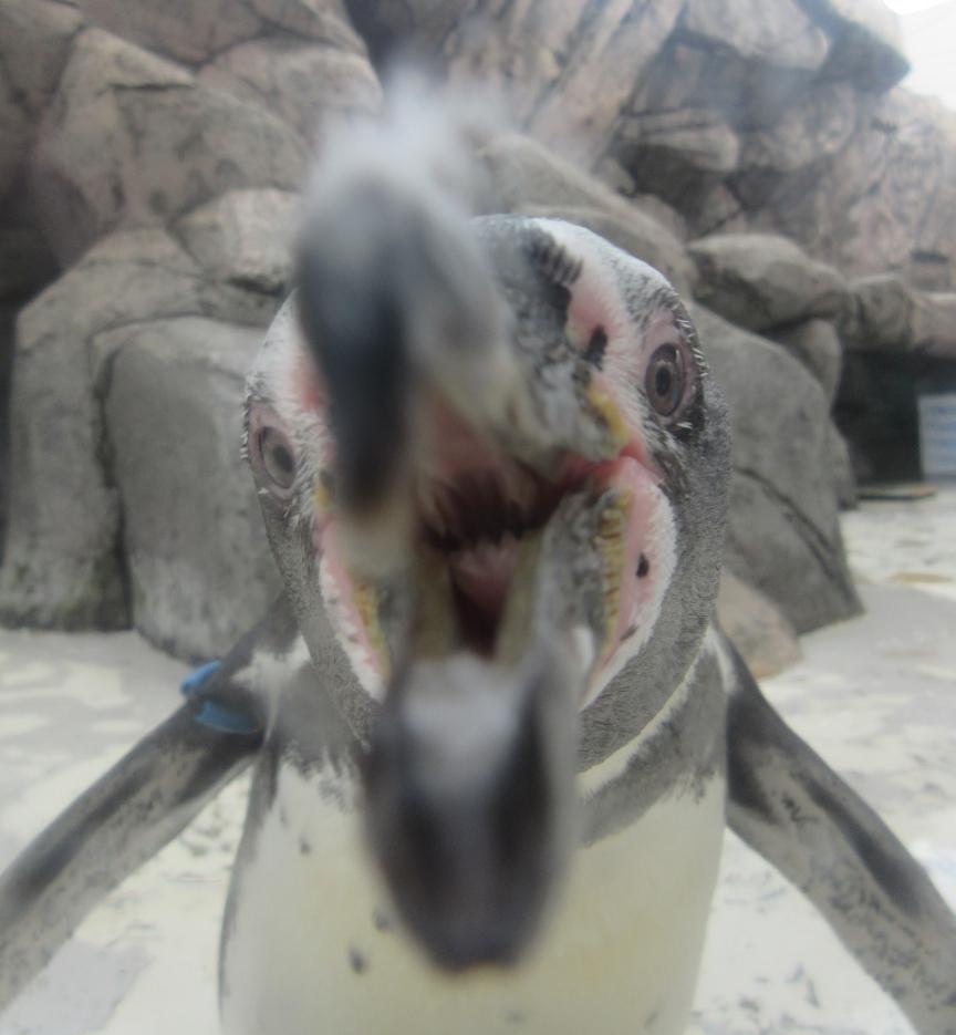 ペンギン全体
