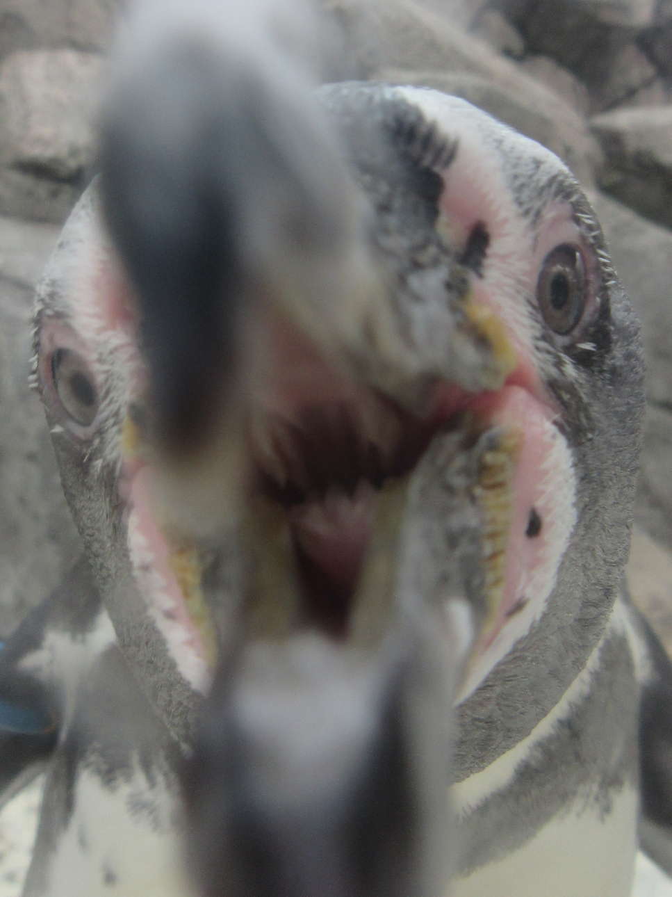 ペンギンアップ