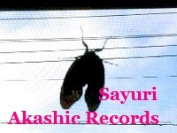 アカシックレコードリーディング アカシックレコードリーダーさゆり セミと網戸