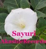 アカシックレコードリーディング アカシックレコードリーダーさゆり 雑草の白い花♪