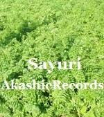アカシックレコードリーディング アカシックレコードリーダーさゆり 人参の緑の葉♪