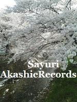 アカシックレコードリーディング 川辺の桜 アカシックレコードリーダーさゆり
