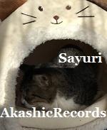 アカシックレコードリーディング アカシックレコードリーダーさゆり ペットハウス 温かいバージョン