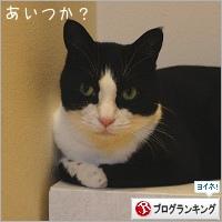 dai20200217_banner.jpg