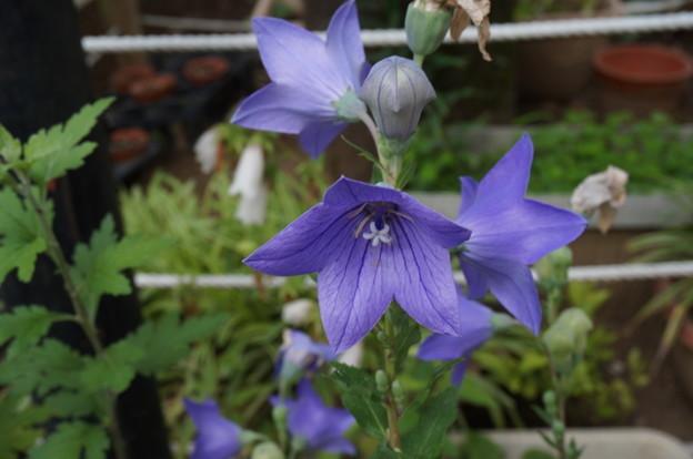 和テイストの花