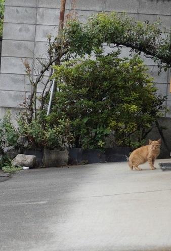 山奥の茶トラ子猫