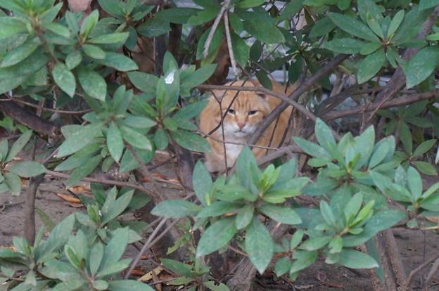 藪の中の住猫