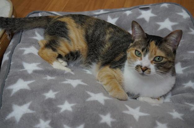 この猫ベッドがお気に入り