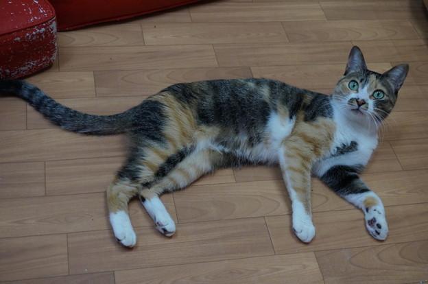 スレンダー美熟猫です