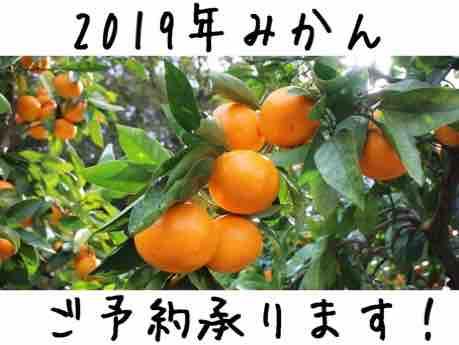 2019みかん販売ページ