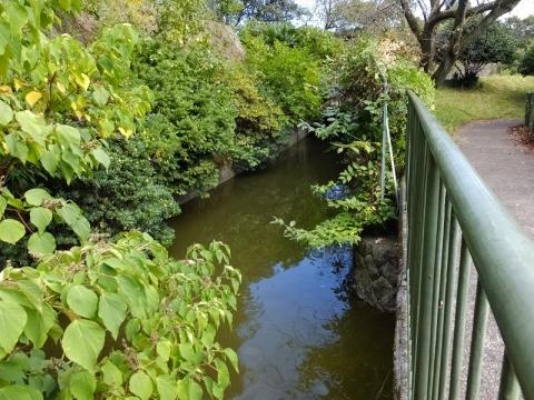 神奈川リハビリテーション病院の池