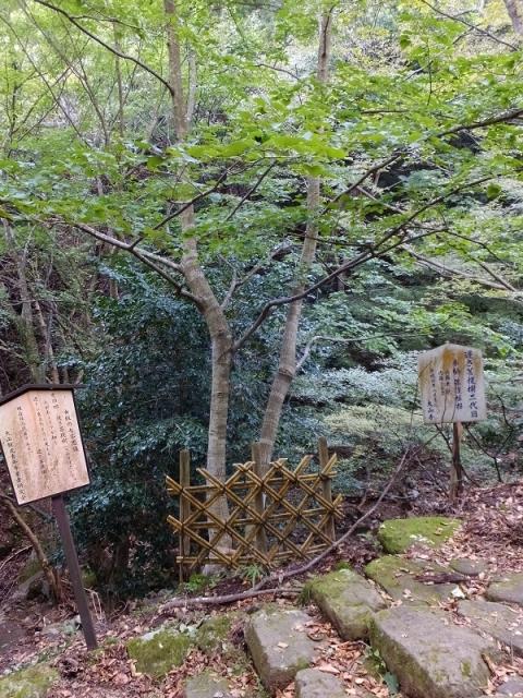 大山参道女坂の七不思議その四「逆さ菩提樹」。