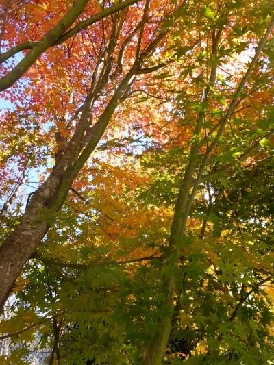 塩川ダムサイトの紅葉