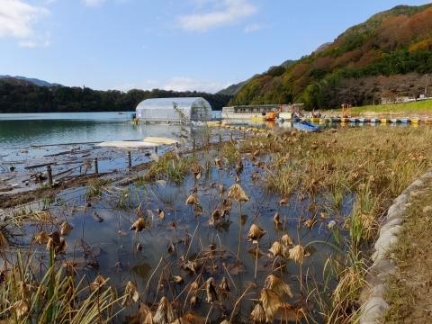 津久井湖・三井植物浄化施設の棚田