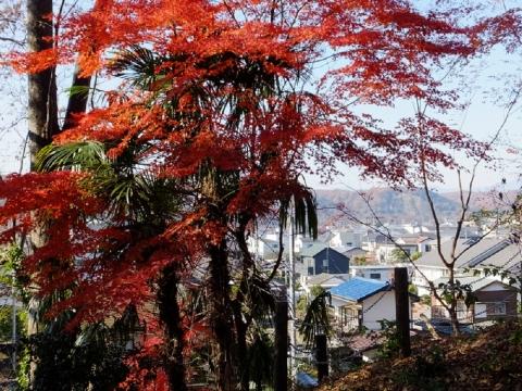 稲荷神社付近の紅葉・東京都羽村市
