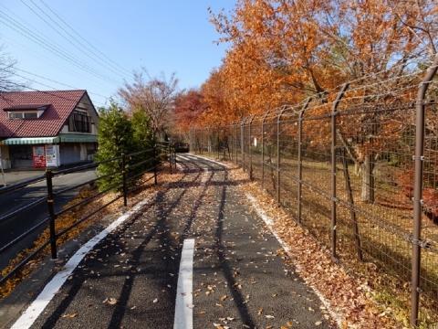 多摩湖自転車歩行者道