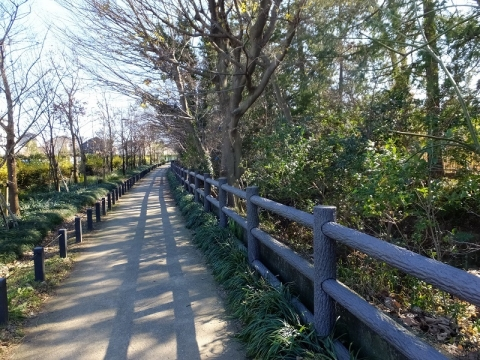 玉川上水緑道・岩崎橋下流