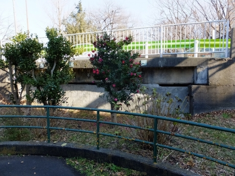 玉川上水に架かる下高井戸橋