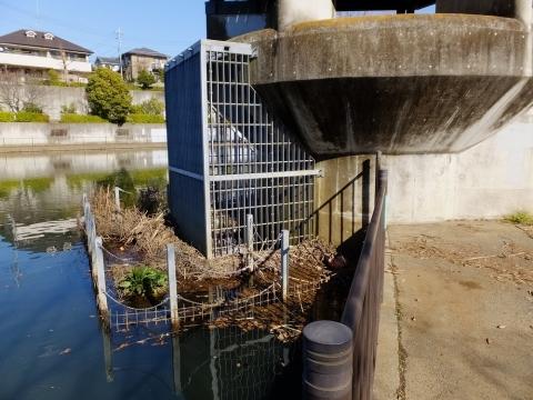 広袴公園調整池放流塔下の放流口