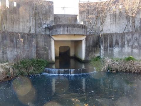 広袴公園調整池へ流入する真光寺川