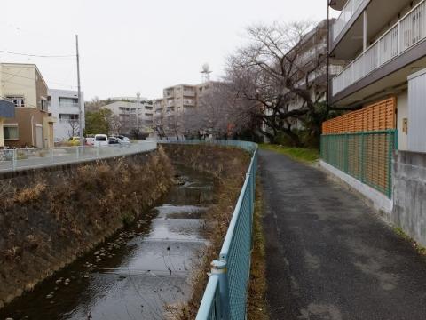 仲村橋上流の麻生川