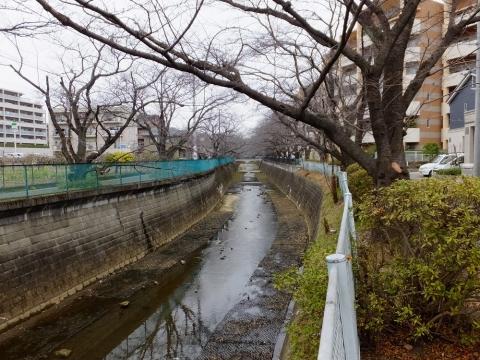 麻生川と桜並木