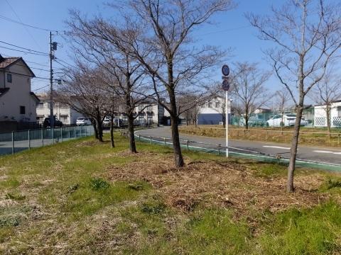 鶴見川旧河道跡・四ツ木橋付近