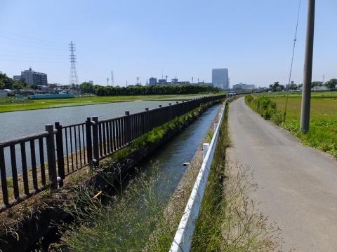 榎戸制水門から始まる支線用水路