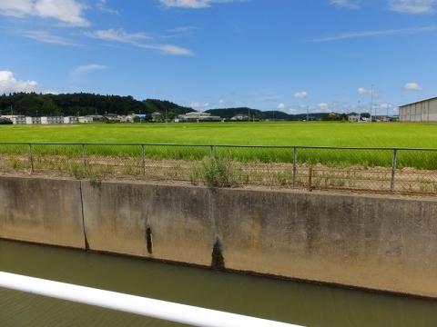 真亀川左岸の田んぼの風景
